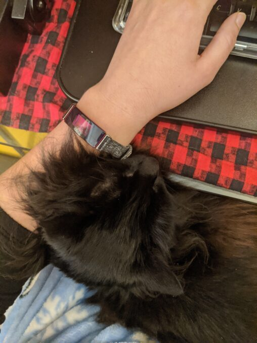 black cat on a lap, with head resting against a forearm