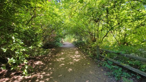 A photograph taken in Lincoln Park, showing lots of green leafy trees and a low wooden fence gently framing a wide dirt walking path.